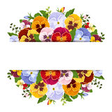 Background with colorful pansy flowers. Vector eps-10. Stock Photos
