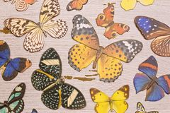 Paper Butterfly Background. A Background of Colorful Paper Butterfly Background stock photography