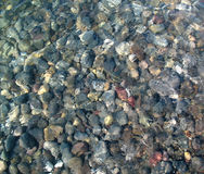 Background from colorful pebbles under sea water. On water visible ripples and sun glare Stock Images