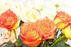 Background of colorful roses Stock Photo