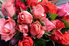 Background with colorful roses brilliant for special days part 1 stock photo