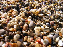 Background from colorful sea pebbles. Pebbles illuminated by sun Stock Photos