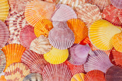 Background of colorful sea shells Stock Photography