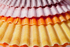 Background of colorful sea shells macro Royalty Free Stock Photography