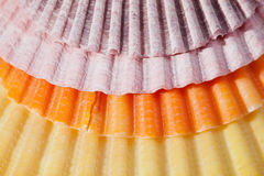 Background of colorful sea shells macro Royalty Free Stock Photos