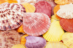Background of colorful sea shells of mollusk Stock Photography