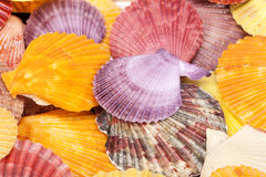 Background with colorful sea shells of mollusks, close up Stock Image