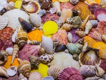 Background of colorful seashells. Concept of preparing to vocational rest. Concept of summer relaxing. Diversity of mollusks stock photo