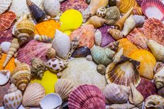 Background of colorful seashells. Concept of preparing to vocational rest. Concept of summer relaxing. Diversity of mollusks royalty free stock images
