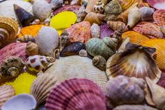 Background of colorful seashells. Concept of preparing to vocational rest. Concept of summer relaxing. Diversity of mollusks stock image