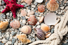 Background with colorful seashells and ropes lying on seashore Royalty Free Stock Photography
