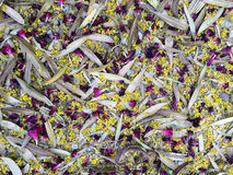 Background, colorful Sprig mess Royalty Free Stock Photos