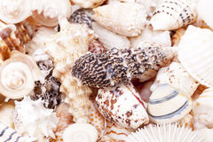 Background of colorful various kinds of sea shells Stock Images