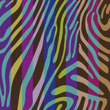 Background with colorful Zebra skin pattern Stock Photography
