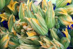 Background of colorful zucchini flowers. Royalty Free Stock Photos