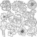 Background colorless ornament garden flowers stock photo