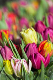 Background of colourful vivid summer flowers Royalty Free Stock Image