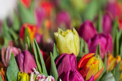 Background of colourful vivid summer flowers Stock Photo