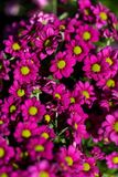 Background of colourful vivid summer flowers Royalty Free Stock Photography