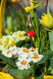 Background of colourful vivid summer flowers Royalty Free Stock Images