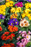 Background of colourful vivid summer flowers Stock Images