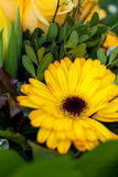 Background of colourful vivid summer flowers Royalty Free Stock Photos
