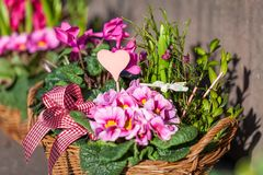 Background of colourful vivid summer flowers Stock Image