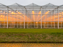 Background of a commercial glasshouse Royalty Free Stock Photos