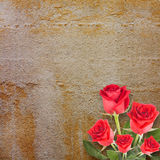 Background for congratulation with beautiful rose Royalty Free Stock Photo