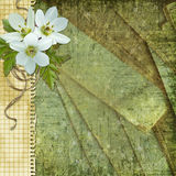Background for congratulation  card Stock Image