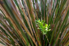 green background contrast with straight stalk texture royalty free stock photography