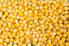 Background of cooked yellow corn grains royalty free stock image