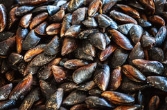 Background Cooking mussels in a pan Stock Photography