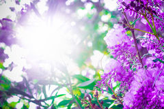Background with copy space and lilac flowers. Stock Images