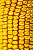 Background Corn Stock Photos