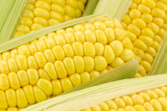 Background of corn on the cob Royalty Free Stock Photography