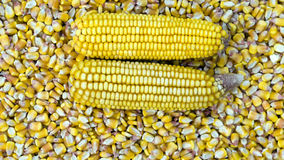 Background of Corn Cob Stock Images