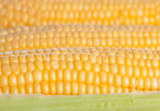 Background from corn cobs Royalty Free Stock Photos