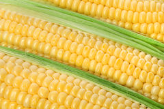 Background of corn cobs Stock Images