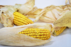 Background with corn Stock Photography