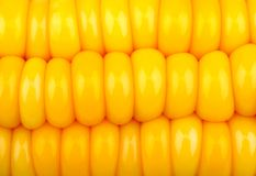 Background of corn grains Royalty Free Stock Photo