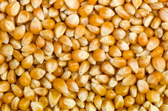Background of corn grains Stock Photo