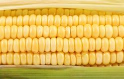Background of corncob. Close up. Royalty Free Stock Image