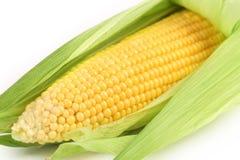 Background of corncob. Close up. Stock Images