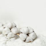 Background with cotton flower Royalty Free Stock Image