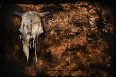 Background with cow skull. Gloomy grunge background with cow skull and copy space stock photos