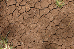 Background of cracked earth with plants Stock Photos