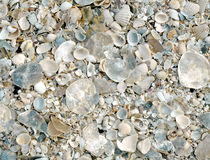 Background of cracked shells Royalty Free Stock Photography