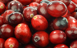 Background of cranberries Stock Image