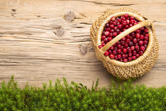 Background with cranberries on old rustic wooden board and moss Stock Photos